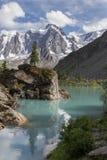 在岩石的杉树在美丽的Shavlinsky湖 库存照片
