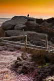 在岩石的松鸡在日出 免版税库存图片