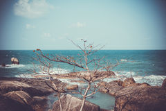 在岩石的树在减速火箭的颜色的海附近 库存图片