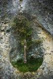 在岩石的树 库存图片