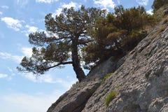 在岩石的树 图库摄影