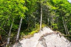 在岩石的树 库存照片