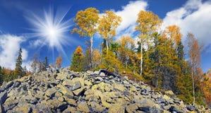 在岩石的桦树 库存照片