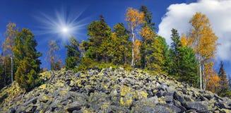 在岩石的桦树 图库摄影