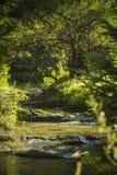 在岩石的流动的河在山 免版税库存图片