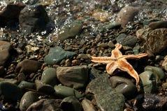 在岩石的海星 免版税库存图片