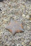 死在岩石的海星 库存图片