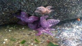 在岩石的海星 免版税图库摄影