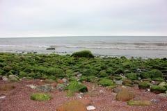 在岩石的海杂草在内斯海滩, Shaldon,德文郡,英国 库存照片
