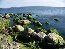 在岩石的海草在海滩 免版税库存图片