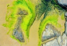 在岩石的海藻在海滩 库存照片