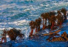 在岩石的海运掌上型计算机在海浪影响区域 免版税库存照片