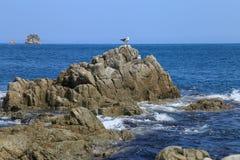 在岩石的海鸥在海 库存照片