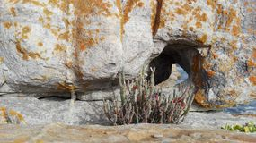 在岩石的漏洞 免版税图库摄影