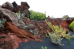 在岩石的热带仙人掌在庭院Jardin de Cactus里在Guatiza村庄,兰萨罗特岛,加那利群岛 免版税图库摄影