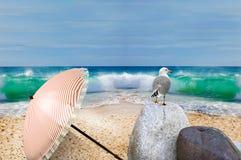 在岩石的热带海滩海鸥 库存照片