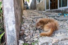 在岩石的狗 库存图片