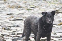 在岩石的狗 免版税库存照片