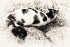 在岩石的猫模仿 库存照片