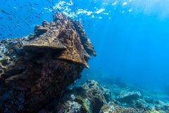 在岩石的珊瑚礁 免版税库存图片