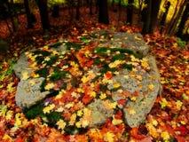 在岩石的秋叶 库存照片