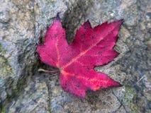 在岩石的秋天叶子 免版税库存图片