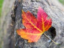 在岩石的秋天叶子 免版税图库摄影