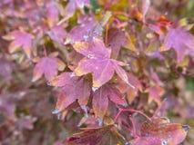 在岩石的秋天叶子 库存照片