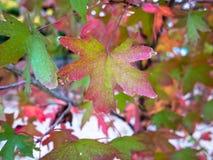 在岩石的秋天叶子 库存图片