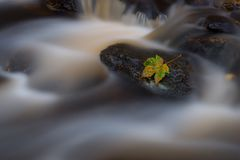 在岩石的秋天leef 免版税库存图片