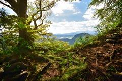 在岩石的老树在Tatra山 免版税库存照片