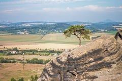 在岩石的自然盆景 免版税库存图片