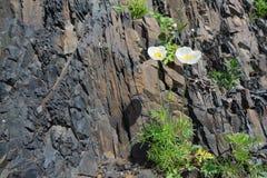 在岩石的花 库存照片