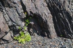 在岩石的花 库存图片