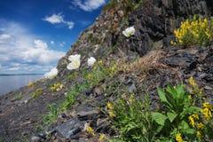 在岩石的花 免版税库存图片