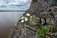在岩石的花 图库摄影