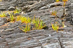 在岩石的草 库存图片