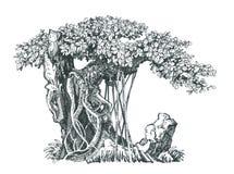 在岩石的落叶盆景 免版税库存照片