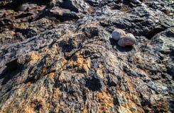 在岩石的蜗牛壳在明亮的太阳 免版税图库摄影