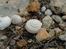 在岩石的蜗牛壳 免版税图库摄影