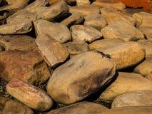 在岩石的蜥蜴 免版税图库摄影