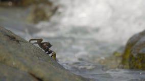 在岩石的螃蟹在海滩 影视素材