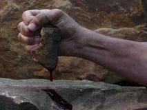 在岩石的血液 库存图片