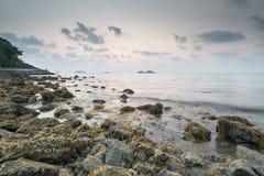 在岩石的褐海藻海藻在日落 库存照片