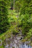 在岩石的边缘的唯一树 免版税图库摄影