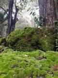在岩石的青苔与庭院 库存图片