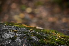 在岩石的青苔与bokeh 免版税库存照片