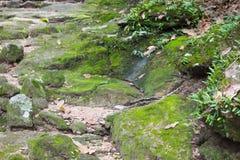 在岩石的青苔在森林,泰国里 库存图片