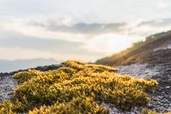 在岩石的青苔树与日落 免版税库存图片