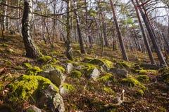 在岩石的青苔, Mala Fatra,斯洛伐克 图库摄影